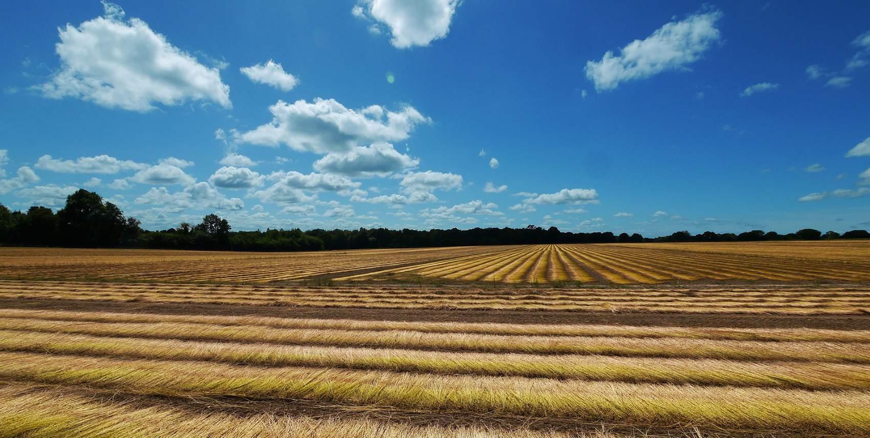 Terres Agricoles Pierre Aussedat